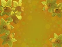 Card with yellow daffodils vector illustration