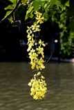 Yellow flowers. Summer season blackground texture outdoor water green leaves royalty free stock image