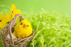 Yellow fluffy Easter chicken in a basket. Yellow Easter fluffy chicken in wicker basket with egg on green background. Copy space royalty free stock photos