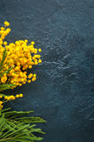Yellow fluffy mimosa flower bouquet on a black stone background. Royalty Free Stock Photos