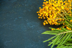 Yellow fluffy mimosa flower bouquet on a black stone background. Royalty Free Stock Photo
