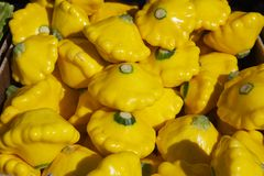 Yellow Flying Saucer Squash. Pile of shiny bright yellow flying saucer squash at the farmers market Royalty Free Stock Photo