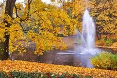 Yellow foliage in the autumn park, Riga, Latvia Stock Images