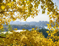 Yellow foliage. The city and the river on the background of yellow leaves Royalty Free Stock Photo