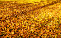 Yellow foliage Stock Photos