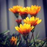 Yellow follows Stock Photography