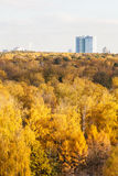 Yellow forest and apartment building in autumn day Royalty Free Stock Photo