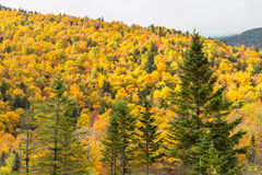 Yellow forest Royalty Free Stock Images