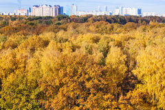 Yellow forest and city on horizon in autumn day Royalty Free Stock Photo