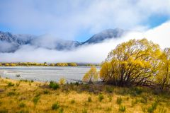 Yellow forest and river in New Zealand mountains. Yellow forest and river in New Zealand Alps Royalty Free Stock Image