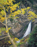 Yellow Forest Waterfall. A small waterfall and a small aspen tree in the Gunnison National Forest of Colorado stock photos