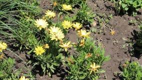 Yellow forga. Image was shot in Burgas Bulgaria stock video