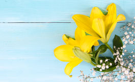 Yellow Forsythia flower and blue background space type Stock Photo