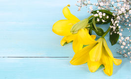 Yellow Forsythia flowers and blue wood consept Stock Photos