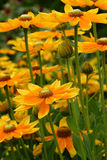 Yellow fowers Stock Images