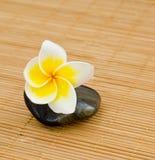 Yellow frangipani Royalty Free Stock Images