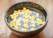 Yellow frangipani flowers floating in the bowl Stock Images