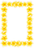 Yellow frangipani framing royalty free stock photos