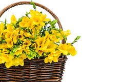 Yellow freesia flowers in the wicker Stock Photo