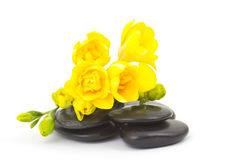 Yellow freesia and massage stones Royalty Free Stock Photo