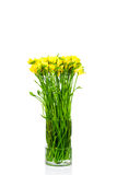 Yellow freesia in the vase Stock Photography