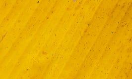 Yellow fresh banana leaf Royalty Free Stock Image