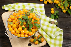Yellow fresh plums in metal bowl on dark wooden table. Fruits on branch. Autumn harvest. Organic product Royalty Free Stock Photo