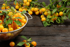 Yellow fresh plums in metal bowl on dark wooden table. Fruits on branch. Autumn harvest. Organic product Royalty Free Stock Image