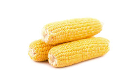 Yellow fresh raw corn cobs isolated on white background. Close up yellow fresh raw corn cobs isolated on white background Royalty Free Stock Photo