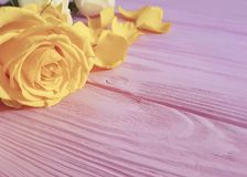 Yellow freshness birthday romance bunch greeting rose on a pink wooden background, frame. Yellow rose freshness on a pink wooden background frame greeting Royalty Free Stock Photography