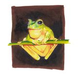 Yellow frog on a branch stock illustration