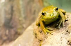 Yellow Frog on Brown Tree Trunk Stock Images