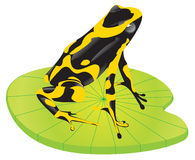 Yellow frog on a leaf Stock Photos