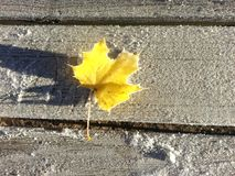 Yellow frosty leaf. Yellow maple leaf on a frosty bench Royalty Free Stock Image