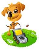 Yellow fun dog mowing lawn Royalty Free Stock Photo