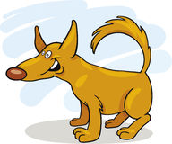 Yellow funny Dog smiling Royalty Free Stock Image