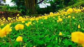 Yellow garden stock photos