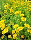 Yellow garden Stock Photo