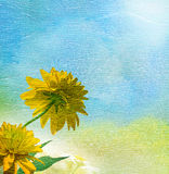 Yellow garden flowers under blue sky. Royalty Free Stock Photography