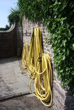 Yellow garden hose. Hanging on the brick wall with ivy Stock Photography