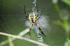 Free Yellow Garden Spider Web Royalty Free Stock Image - 99054336