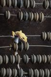 Yellow gecko on the abacus. Yellow gecko on bills. Curiously considers unfamiliar device stock photos
