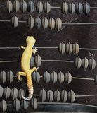 Yellow gecko on the abacus. Yellow gecko on bills. Curiously considers unfamiliar device stock image