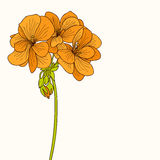 Yellow geranium flower drawing Royalty Free Stock Photos