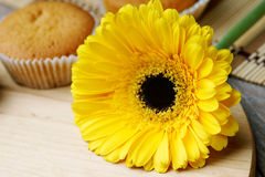 Yellow gerber and muffin Royalty Free Stock Images