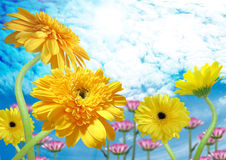 Yellow gerbera on blue sky Stock Photography