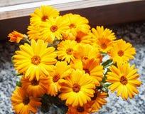 Yellow gerbera in bunch Stock Photography