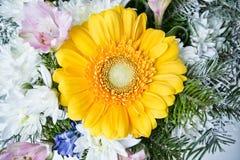 Yellow gerbera close up Royalty Free Stock Photos
