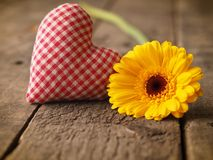 Yellow gerbera daisy with a checkered fabric heart shape Stock Image