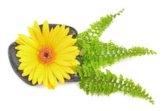 Yellow gerbera flower and black zen stone Royalty Free Stock Photos